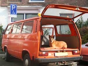 VW T3 luchtgekoelde kombi met hond achterin
